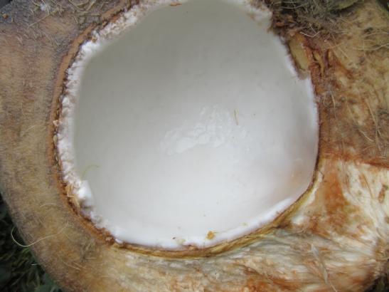 Kokosnussinnere