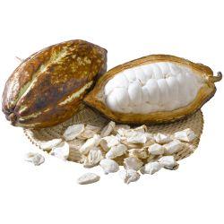Bohnen der Kakaoschote mit Fruchtfleisch