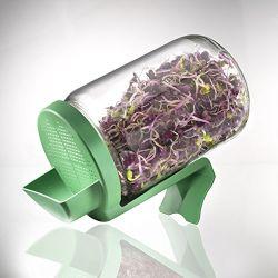 Glas für Sprossenzucht