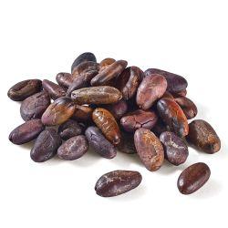 Bohnen der Kakaoschote
