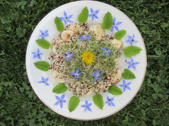 Alfalfa und Quinoasprossen