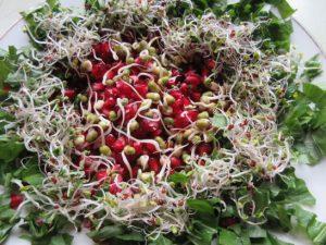 Obstteller mit Granatapfel