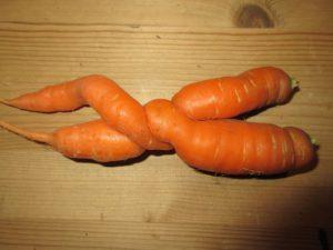 Liebe der Karotte